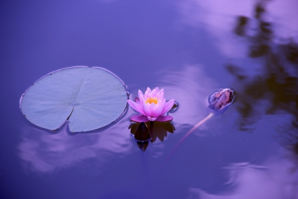 corso-yoga-mindfulness
